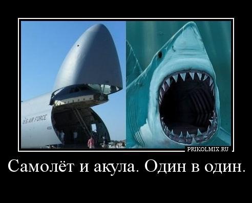 акулы боятся демотиваторы того, чтобы увидеть